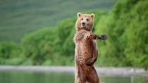 Những hình ảnh loài gấu nâu trong thế giới tự nhiên