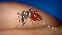 11 câu hỏi cần biết về bệnh sốt xuất huyết Dengue