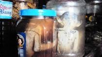 Thêm những hình ảnh tàn sát động vật cực kỳ dã man tại Quảng Bình