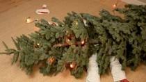 Phì cười với bộ ảnh hài ngày Giáng sinh