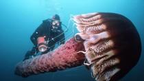 Những sinh vật biển khổng lồ quý hiếm do chuyên gia Hải quân Mỹ chụp