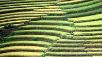 Lúa biến đổi gene có thể dùng để sản xuất máu người