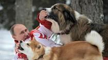 Ảnh: Putin chơi đùa trong tuyết với chó cưng