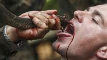 Lính Mỹ uống máu rắn, cắn cổ gà tại Cobra Gold 2014