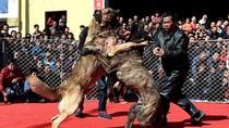 Ảnh: Cẩu chiến đẫm máu tại Trung Quốc