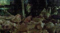 Theo chân nhà hàng, mua gà chết 25.000 đồng/kg làm lẩu bán