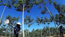 """Trước cáo buộc """"phá rừng"""" của Global Witness: HAGL """"sẵn sàng đối chất"""""""