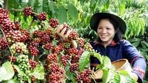 """Báo nước ngoài gọi Việt Nam là """"ông hoàng mới trong ngành cà phê"""""""