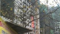 Mua penthouse Đại Thanh: Không sổ đỏ khách vẫn mất tiền vênh
