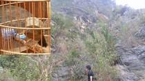 """Chim chọi đệ nhất Hà thành: Cùng """"đại gia"""" lên núi """"săn chim"""""""