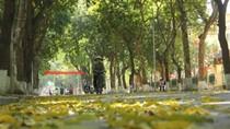 Góc ảnh độc giả: Xao xác lá vàng rơi trên đường phố Hà Nội
