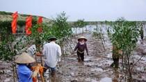 Biến đổi khí hậu: Tác động mạnh mẽ tới nền kinh tế Việt Nam