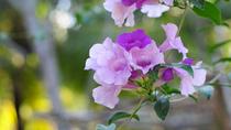 Chùm ảnh: Long lanh những cánh hoa khoe sắc