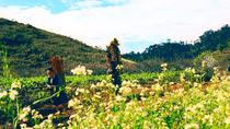 Chùm ảnh: Mộc Châu mùa hoa cải