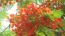 Góc ảnh độc giả: Sắc hoa phượng rực rỡ trên khắp phố phường Hà Nội(P1)