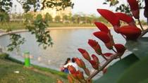 Hoa móng rồng tự tin khoe sắc đỏ trong nắng hè