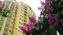 Rực rỡ sắc bằng lăng tím ngắt trên phố phường Hà Nội (P2)