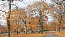 Boston ngập trong sắc vàng ngày cuối thu