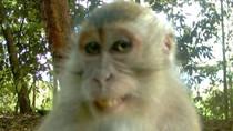 Những hình ảnh độc đáo có 1-0-2 của các loài động vật