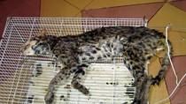 Những hành động dã man đối với các loài động vật sẽ bị phạt tù