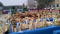 """Trung Quốc công khai tiêu hủy 6,1 tấn ngà voi để """"lấy le"""" với quốc tế?"""