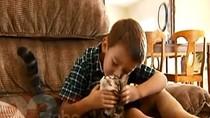 Video: Chó hoang tấn công trẻ em bị mèo nhà đánh đuổi