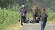 """""""Tránh voi chẳng xấu mặt nào"""""""