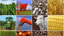 Thủ tướng duyệt Kế hoạch cơ cấu lại ngành nông nghiệp