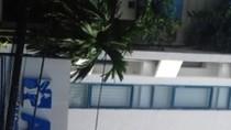 Bác sỹ ngoại quốc ở phòng khám ACC không có chứng chỉ hành nghề