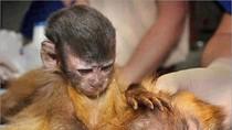 Bức ảnh khỉ con chăm mẹ khơi gợi tình mẫu tử cao đẹp