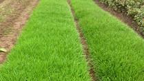 Sai phạm nghiêm trọng trong thu hồi đất tại dự án đề-pô xe điện Hà Nội