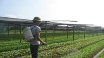 Sản xuất nông nghiệp có nguy cơ mất an toàn