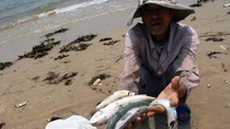 Xử lý nghiêm minh cá nhân, tổ chức gây ra sự cố hải sản chết hàng loạt