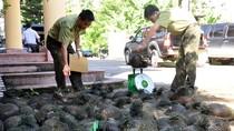 Xử lý nghiêm minh các hành vi xâm hại động vật hoang dã