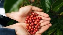 Vinh danh cà phê Buôn Mê, rạng danh cà phê Việt Nam