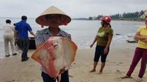 Hoàn thiện đề án bồi thường, hỗ trợ khôi phục sản xuất cho ngư dân miền Trung