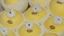 Intimex nhập khẩu táo tươi chính gốc Aomori - Nhật Bản nổi tiếng thế giới