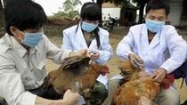 Việt Nam tăng cường kiểm soát các bệnh lây từ động vật sang người