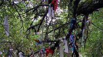 Lạ lùng tục treo vải lên cây của người Celtic