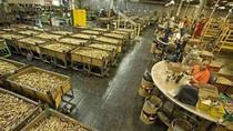 Thâm nhập nhà máy sản xuất đạn của Mỹ