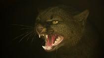 Bộ Quốc phòng Anh che giấu sự tồn tại của loài mèo khổng lồ?