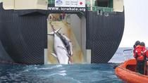 Ngư dân Nhật bắt giữ 3 nhà hoạt động chống săn cá voi Úc