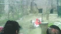 Video: Thanh niên tâm thần chui vào chuồng cọp trêu chúa sơn lâm