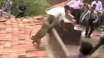 Video: Báo bị truy đuổi tấn công người ở Ấn Độ
