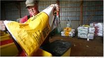 Trung Quốc đang cố gắng đánh cắp hạt giống ngô của Mỹ