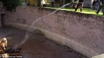 Video: Cựu cảnh sát Tây Ban Nha nhảy vào chuồng sư tử