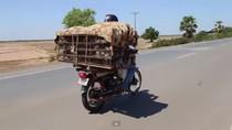 Video: Campuchia bắt chuột xuất khẩu sang Việt Nam