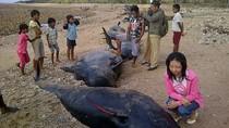 Dân Indonesia xẻ thịt hàng chục cá voi mắc cạn