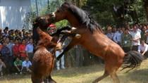 Màn đấu ngựa kịch tính ở nông thôn Trung Quốc