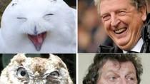 Tân HLV tuyển Anh giống... chim cú đến lạ kỳ